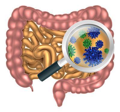 Tipos de bacterias intestinales - Flora bacteriana