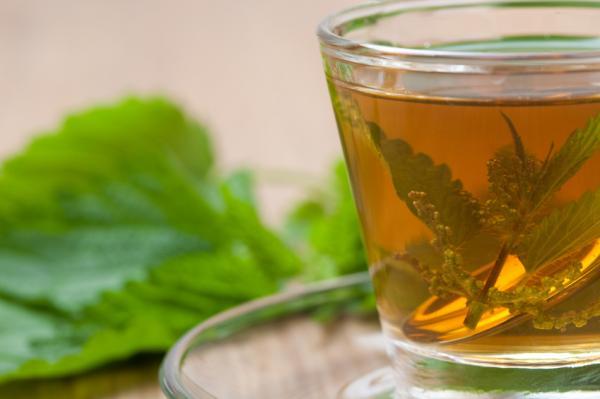 Propiedades medicinales de la ortiga verde - Cómo usar la ortiga verde