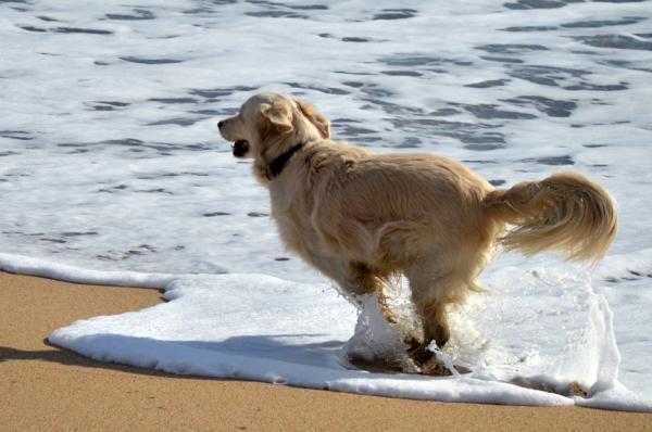 Beneficios del agua de mar para los perros