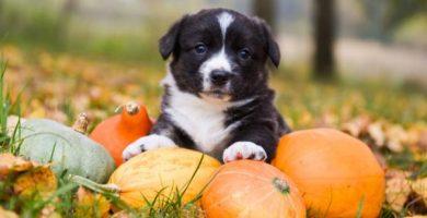 Calabaza para perros: beneficios, dosis y cómo prepararla