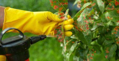 Cómo utilizar el vinagre para las plantas
