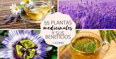 Nombres de plantas medicinales y para qué sirven