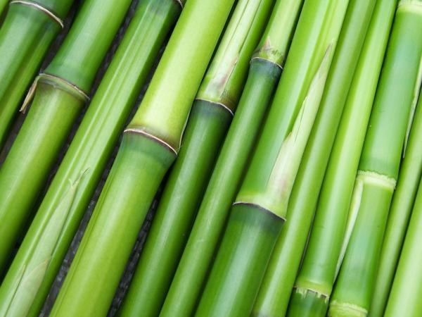Propiedades del bambú para la salud