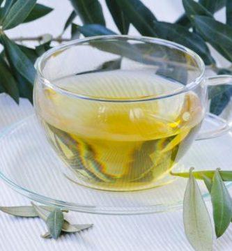 Propiedades y contraindicaciones de las hojas de olivo