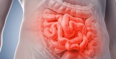 Tipos de bacterias intestinales