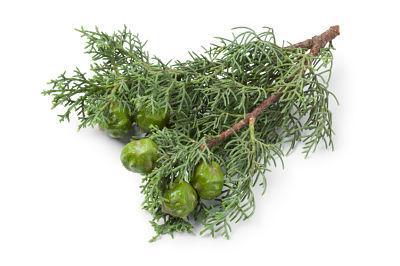 Remedios caseros para la tos ferina - Vapor de aceite de ciprés