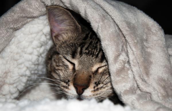 Cómo calentar una casa sin calefacción - Paso 8