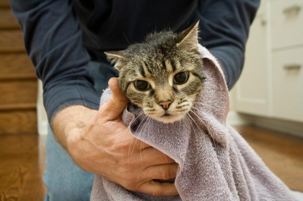 Cómo poner gotas en los oídos a un gato - Paso 4