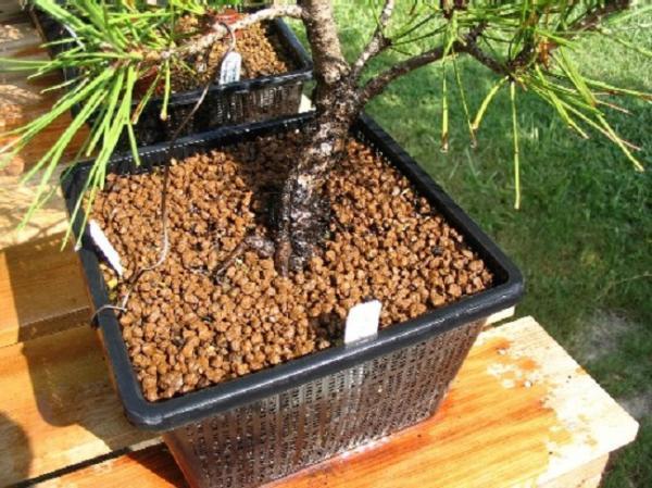 Cuál es el mejor sustrato para un bonsái - El sustrato más adecuado para cultivar un bonsái