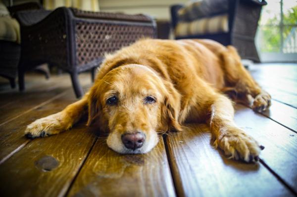 6 vitaminas para los perros - Cómo saber si mi perro necesita vitaminas