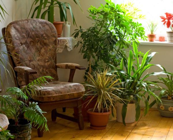 Cómo empezar tu colección de bonsáis - Modificación de plantas de interior