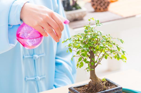 Cómo empezar tu colección de bonsáis - Viveros especializados