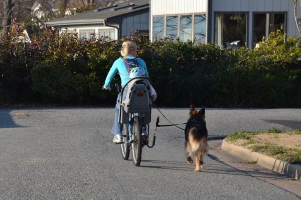 Cómo llevar a mi perro en bicicleta - Adaptador para llevar a tu perro en bicicleta