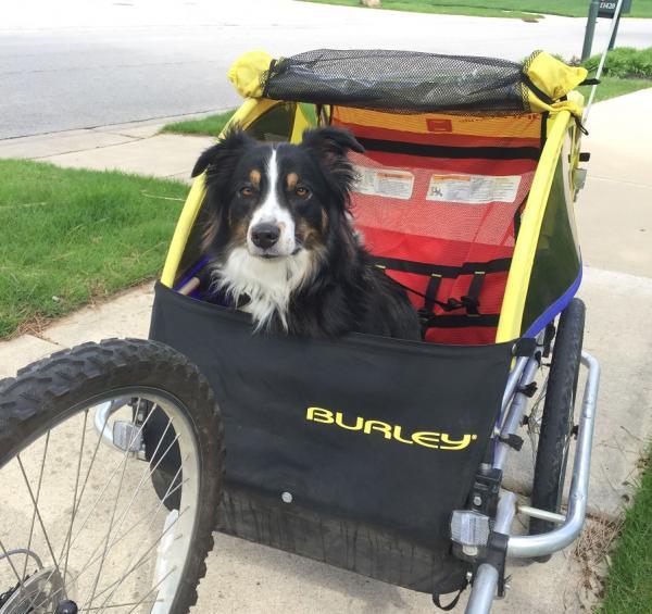 Cómo llevar a mi perro en bicicleta - Remolque para pasear con tu perro en bicicleta