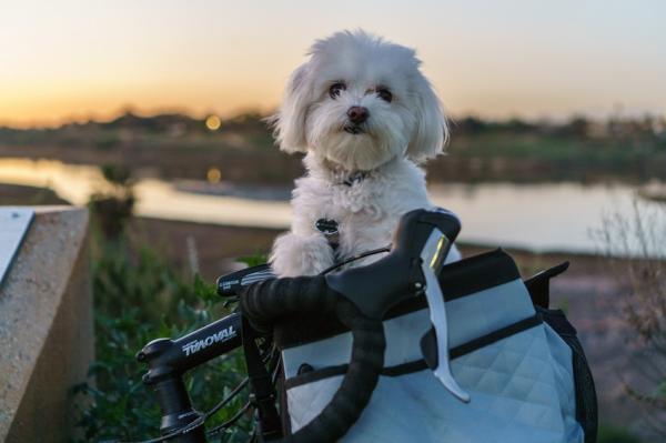 Cómo llevar a mi perro en bicicleta - Cesta especial para llevar a canes en bicicleta