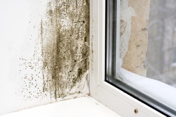 Cómo afecta el moho a la salud - Condiciones para que crezca el moho