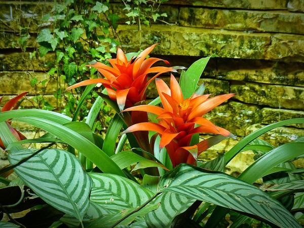Las mejores plantas para un terrario - Bromelia