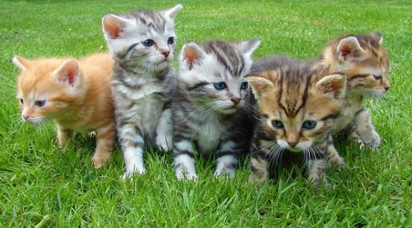 Nombres mitológicos - ¡Los mejores! - Nombres mitológicos para gatos