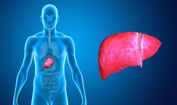 Por qué tengo un sabor amargo en la boca - Enfermedades que afectan al hígado