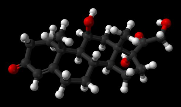 Cuál es la función de las hormonas - ¿Cómo funcionan las hormonas?