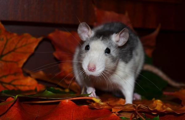 Cómo ahuyentar ratones de casa - Paso 3