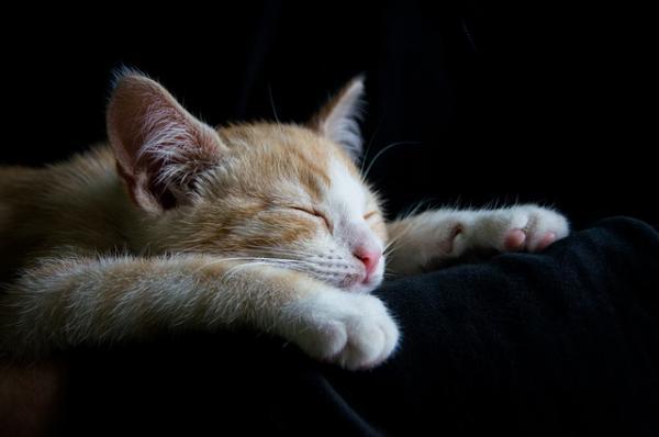 Cómo alargar la vida de un gato - El descanso en los gatos