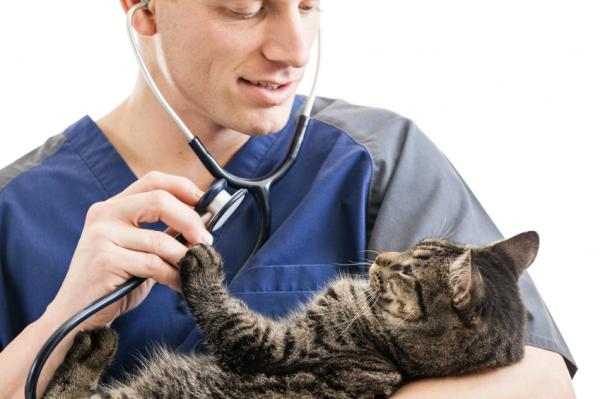 Cómo saber si mi gato tiene alergia a las pulgas - Paso 2