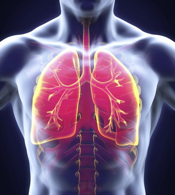 Funciones del sistema respiratorio - El aparato respiratorio