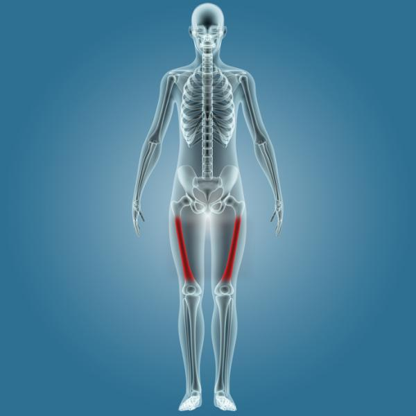 Cuál es el hueso más largo del cuerpo humano - El hueso más largo es el fémur