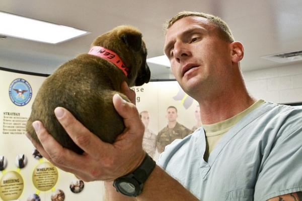 Cómo tratar la hepatozoonosis canina - Paso 3