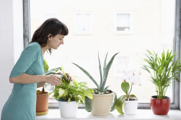 Remedios caseros para humidificar una habitación - Paso 2