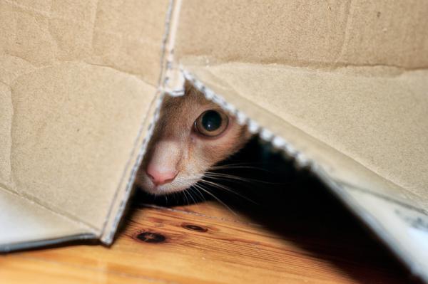 Dónde puede esconderse un gato - Dónde puede esconderse un gato en casa