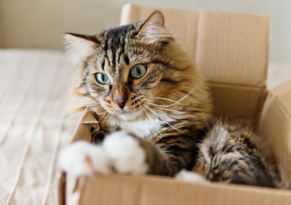 Dónde puede esconderse un gato - ¡No obligues a tu gato a salir!