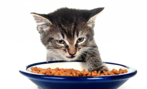 Qué hacer si me encuentro un gato - Paso 3