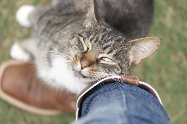 Qué hacer si me encuentro un gato - Paso 1