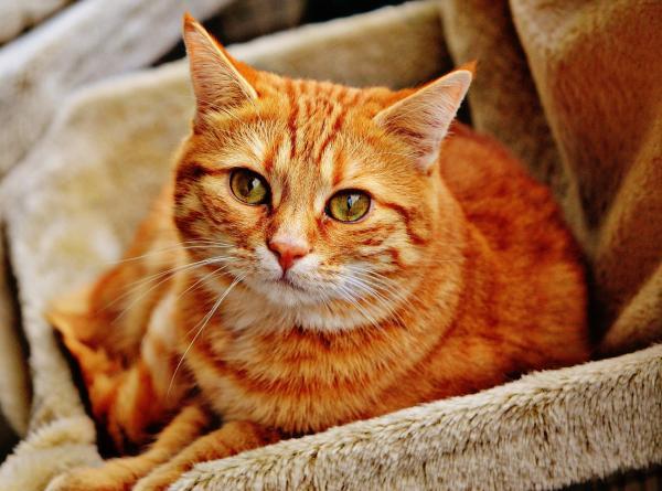 Qué hacer si me encuentro un gato - Paso 5