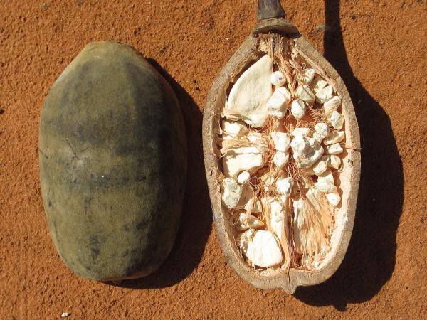 Cuáles son los superalimentos - Baobab