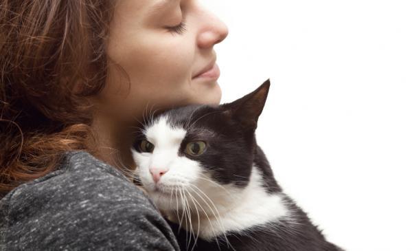 Qué hacer si se pierde mi gato - Paso 9