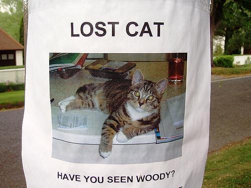 Qué hacer si se pierde mi gato - Paso 6