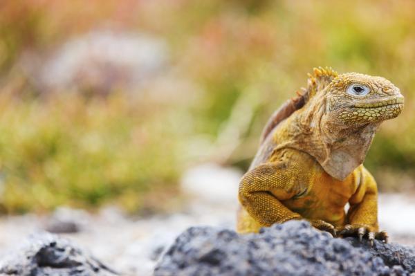 Cómo cuidar una iguana - Paso 2