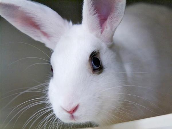 Cómo limpiar la jaula de un conejo - Paso 5