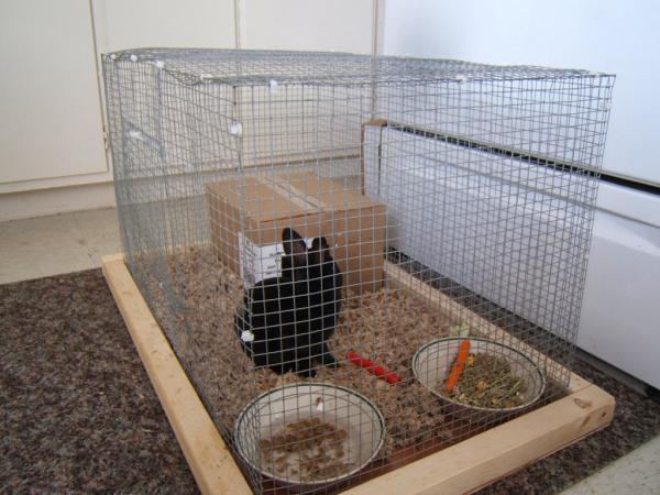 Cómo limpiar la jaula de un conejo - Paso 4