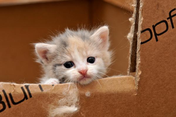 Los nombres de gatos más graciosos - Nombres marineros