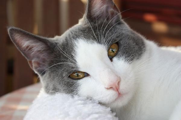 Los nombres de gatos más graciosos - Nombres de gatos muy originales