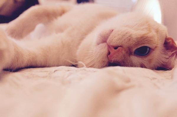 Los nombres de gatos más graciosos - Nombres que remarquen sus características