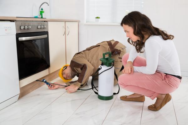 Cómo eliminar las hormigas de mi cocina - Paso 8