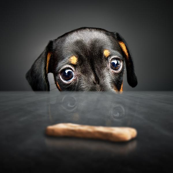 Cómo hacer galletas para perros fáciles