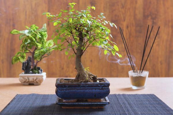 Cómo podar las ramas y las raíces de un bonsái