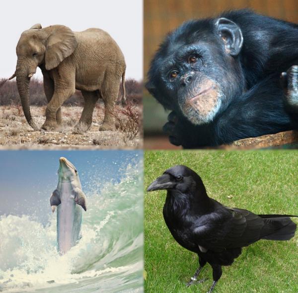 Cuál es el animal más inteligente del mundo