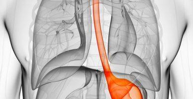 Cuál es la función del estómago